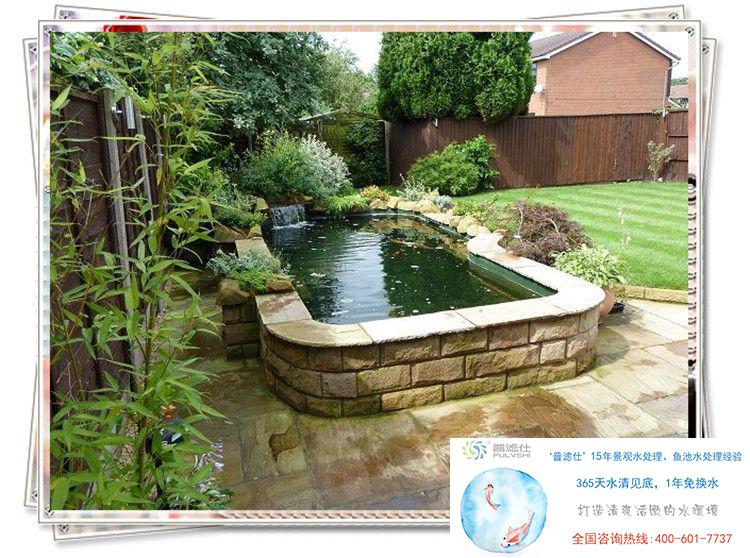 金碧林告诉你家庭锦鲤鱼池的水环境建立方法
